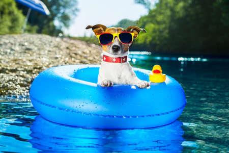 Hund auf blauem Luftmatratze im Wasser erfrischend
