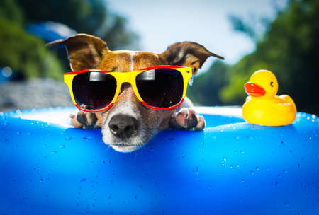 holiday pets: dog on  blue air mattress  in water refreshing Stock Photo