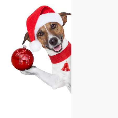 christmas dog as santa behind placard with a big red christmas ball photo