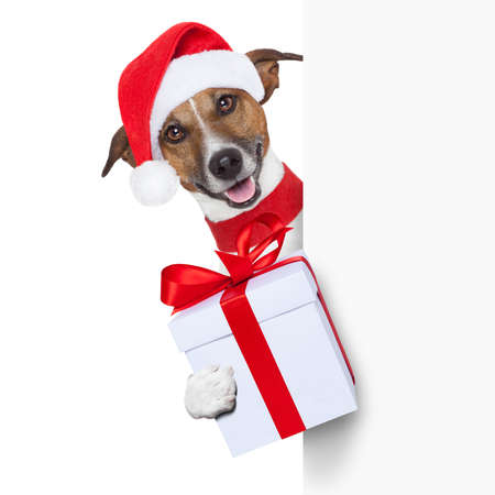 christmas costume: christmas dog as santa behind placard with big present as a gift