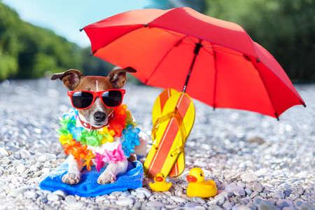 luz do sol: cão sob guarda-chuva na praia com patos de borracha amarelos
