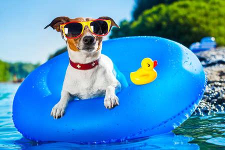 swim?: perro en el colchón de aire azul en agua refrescante Foto de archivo