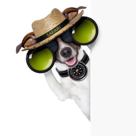 safari dog searching and  looking with binoculars beside banner Stock Photo - 21377319