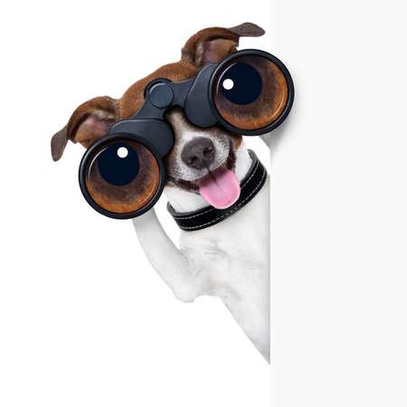 grappige honden: verrekijker hond zoeken, kijken en observeren