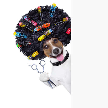 wig: hairdresser  scissors  dog beside white banner with hair rollers Stock Photo