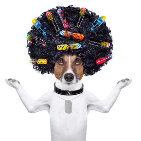 salon background: afro look dog with very big curly black hair and hair rollers
