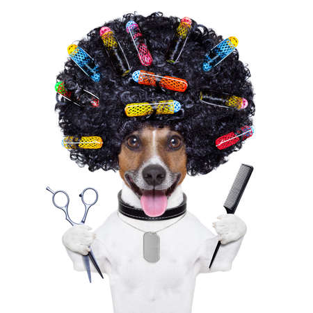 afro look dog with very big curly black hair , scissors and hair comb  with hair rollers