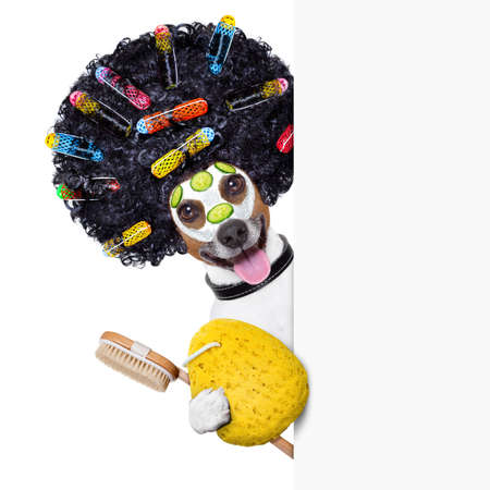 body grooming: wellness dog with hair rollers and sponge beside a banner