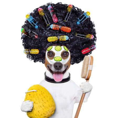 wellness dog with hair rollers and sponge Stock Photo