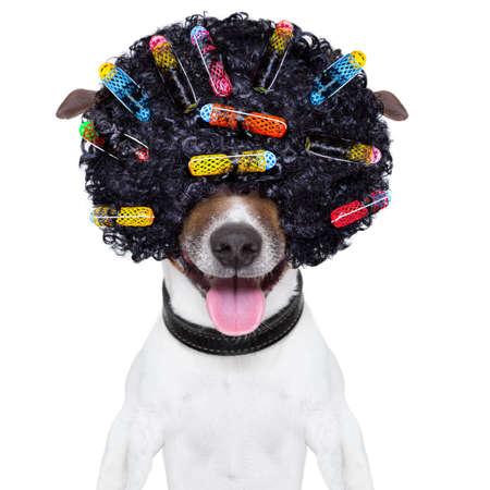 クレイジーな巻き毛アフロ顔ウィッグと髪飾りカーラーと犬 写真素材