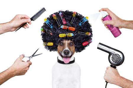Stylist: tijeras de peluquero perro peine rociado Wellness Spa Foto de archivo