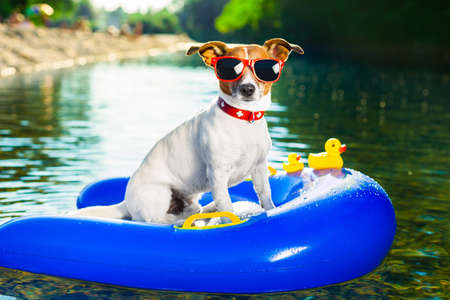 dog on  blue air mattress  in refreshing  water Stock Photo - 21883480
