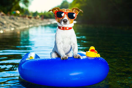 dog on  blue air mattress  in refreshing  water Stock Photo - 21883481