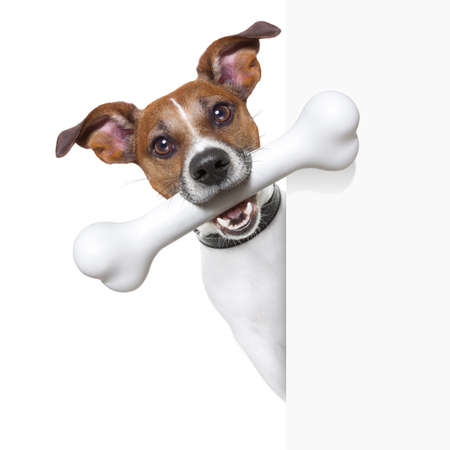dog with a big white bone and  a white banner