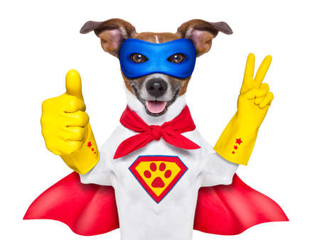 용감: 빨간 망토와 파란색 마스크 싶게 엄지 손가락을 가진 슈퍼 영웅 개 스톡 사진