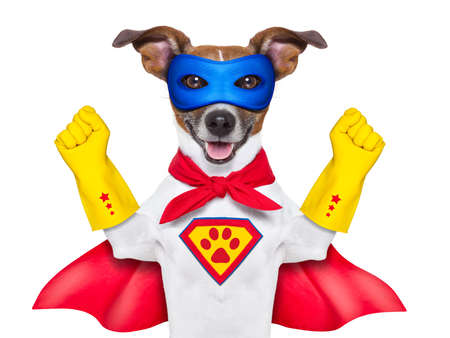 heroic: super hero dog with  red cape and a  blue mask