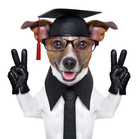 educated: graduate dog with peace fingers and happy Stock Photo