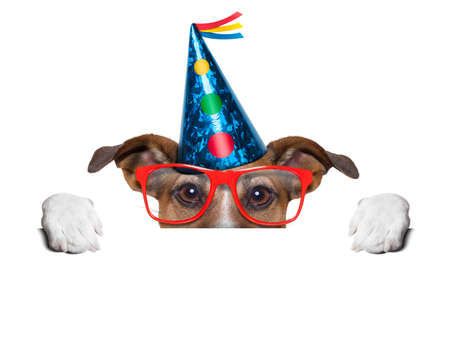 birthday dog hiding behind blank banner photo