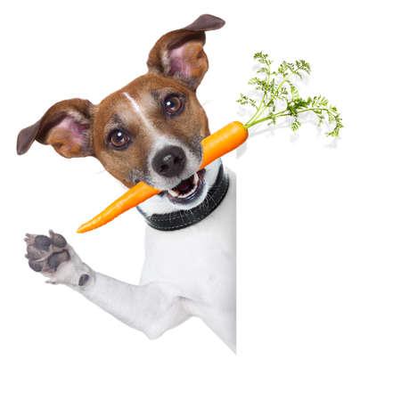 perro comiendo: perro sano con una zanahoria al lado de una bandera en blanco