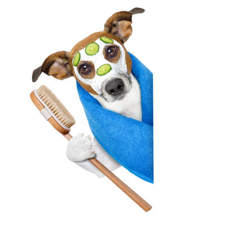 cucumber: dog with a beauty mask beside a blank banner