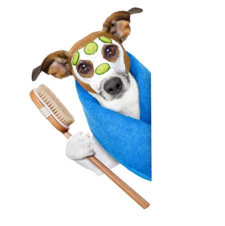 baÑo: perro con una máscara de belleza al lado de una bandera en blanco Foto de archivo