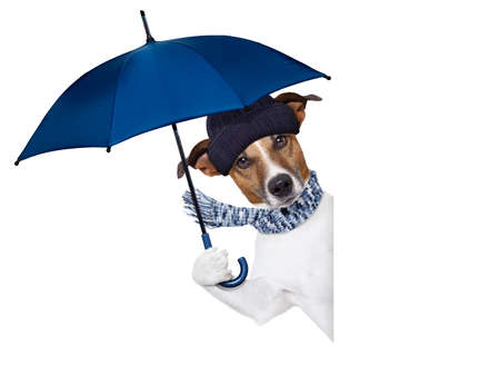 winter day: rain umbrella winter dog Stock Photo