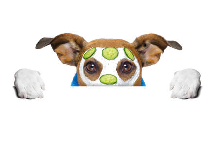 cucumber: wellness dog behind banner with a cucumber mask Stock Photo