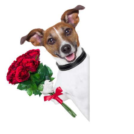 空白のバナーの横に赤いばらの束とバレンタイン犬