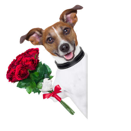 valentine dog  with a bunch of  red  roses beside a blank banner