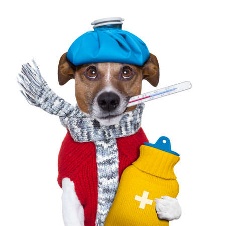 zieke hond met koorts en een warmwaterkruik