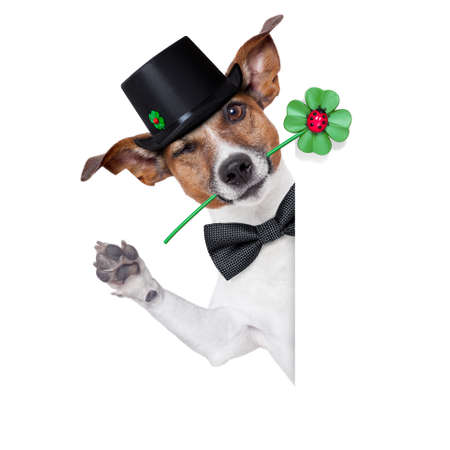 good luck chimney sweeper dog with hat and clover behind a blank banner photo