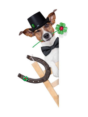 lucky chimney dog on a ladder with a four  leaf clover beside a blank banner photo