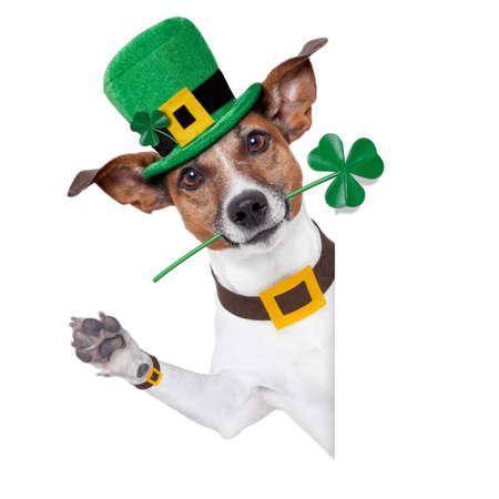 st. El perro de patrick día con un trébol detrás de una pancarta Foto de archivo