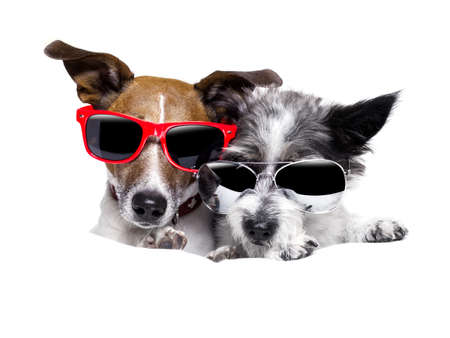 two dogs cozy together Stock Photo - 23042430