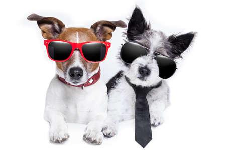 twee schattige honden heel dicht bij elkaar