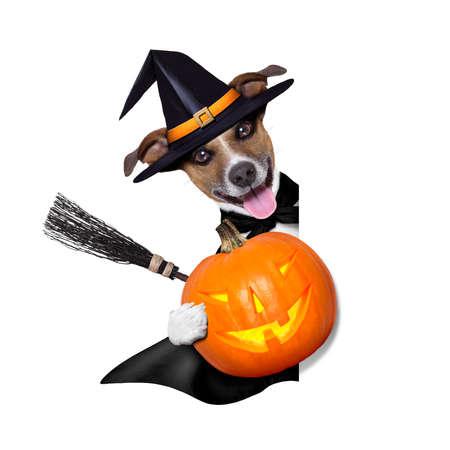 sorci�re halloween: chien de halloween de sorci�re tenant une citrouille derri�re une banderole blanche
