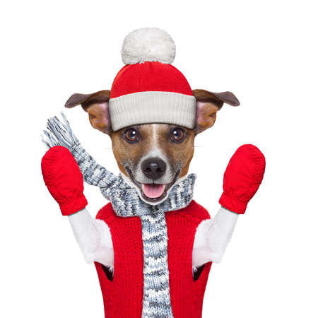 winter christmas dog with red gloves and pullover photo