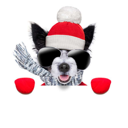 freeze: winter christmas dog with red gloves and pullover behind blank banner