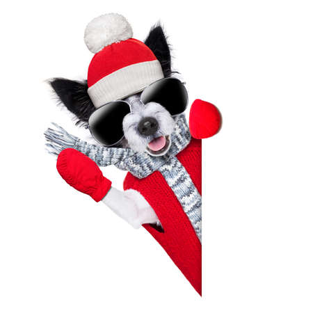 winter christmas dog with red gloves and pullover behind blank banner