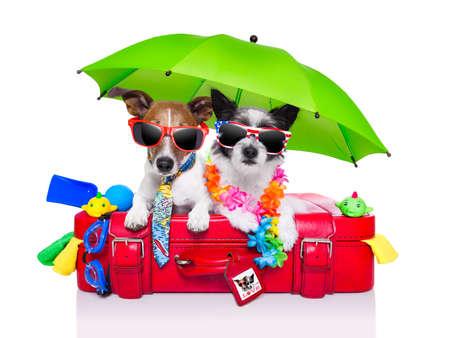suitcases: vakantie honden op een rode zak gekleed als toeristen Stockfoto