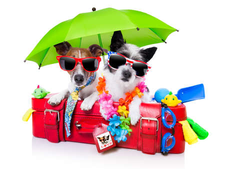 tropical beaches: holiday dogs on a red bag dressed as tourists