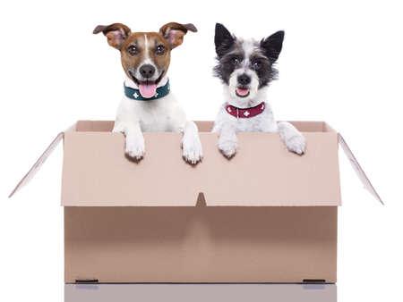 trasloco: due cani elettronica in una scatola movimento marrone