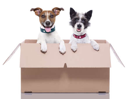 moving box: two mail dogs in a brown moving box Stock Photo