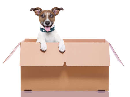 packaging move: mail dog in a moving very  big moving box