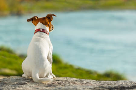 dog thinking and watching about the future Imagens