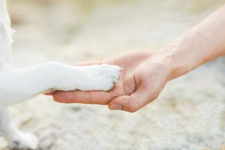the faithful: dog with paw high five and hand of owner Stock Photo