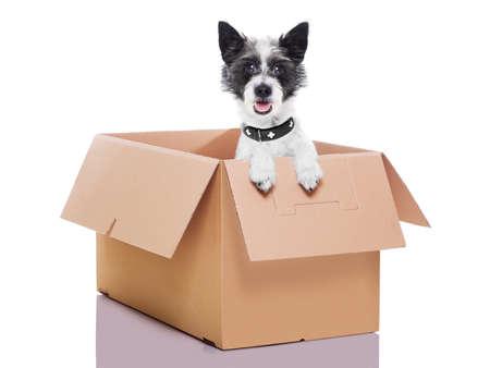 mail dog in a very  big moving box Reklamní fotografie