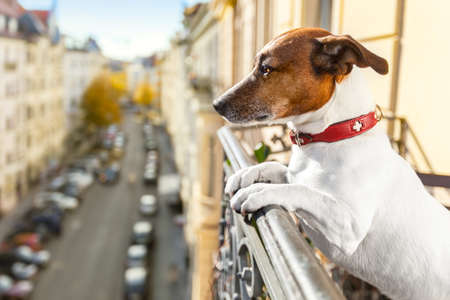nosy watching dog form top of balcony Stock Photo