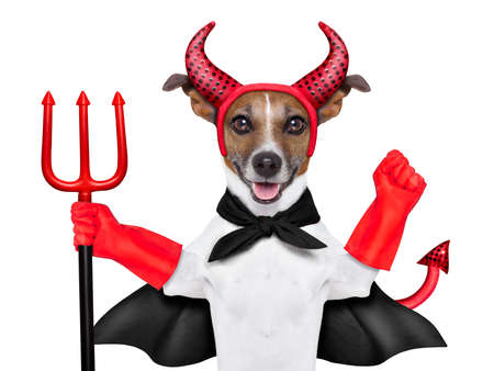 perro asustado: diablo perro detr�s de una bandera blanca en blanco