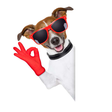 alright: ok fingers dog with red gloves and glasses behind banner Stock Photo